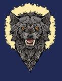 Kolorowy wizerunek gniewny wilk w ramie fotografia royalty free