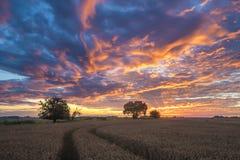 kolorowy wschód słońca nad polem zdjęcia stock