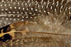 Kolorowy wzór Ptasi piórka Zdjęcie Stock