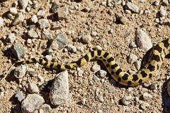 Kolorowy wzorzystość węża ogon zdjęcia royalty free