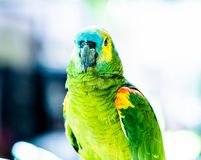 kolorowy zamkni?ta kolorowa papuga zdjęcia stock