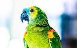 kolorowy zamkni?ta kolorowa papuga obrazy stock