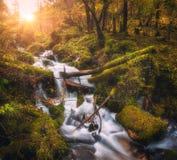 Kolorowy zielony las z małą siklawą przy zmierzchem Obraz Stock