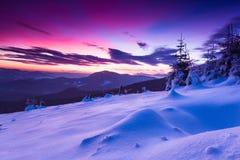 Kolorowy zima ranek w górach overcast dramatyczny niebo Widok śnieżyści conifer drzewa przy wschodem słońca Wesoło Christmas fotografia stock