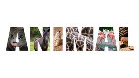 Kolorowy znak na białym tle Słowa zwierzę fotografia stock