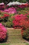 kolorowych anglików parkowa wiosna Zdjęcie Stock