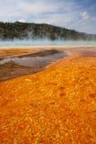 Kolorowych bakterii matowa otaczająca Uroczysta Graniastosłupowa wiosna Obrazy Royalty Free