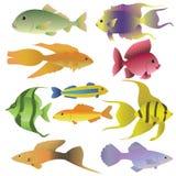 10 kolorowych dekoracyjnych ryba ilustracji
