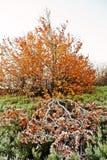 Koloru żółtego żywy drzewo z nieboszczyka gałęziastym i zamarzniętym drzewem Pojęcie de Obrazy Stock