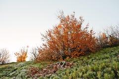 Koloru żółtego żywy drzewo z nieboszczyka gałęziastym i zamarzniętym drzewem Pojęcie de Fotografia Royalty Free