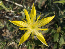 Koloru żółtego Gładki trzon Płonie gwiazdę obraz stock