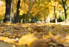 Koloru żółtego i czerwieni liście na ziemi Obrazy Royalty Free