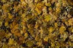 Koloru żółtego i pomarańcze liście łóżkowi Fotografia Stock