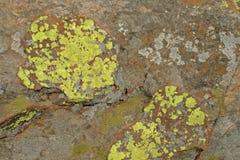 KOLORU ŻÓŁTEGO I rdzy liszaju przyrost NA skałach Fotografia Stock