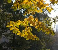 Koloru żółtego i zieleni jesieni liście 3 Zdjęcia Stock