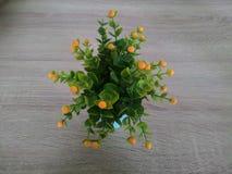 Koloru żółtego i zieleni róża na stole Zdjęcie Royalty Free