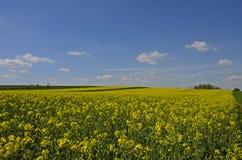 Koloru żółtego niebieskie niebo i pola obrazy stock