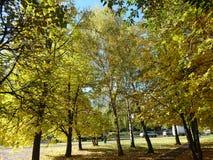Koloru żółtego park Zdjęcie Royalty Free