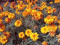 Koloru żółtego piękni kwiaty zdjęcia royalty free
