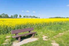 Koloru żółtego pole i ławka Zdjęcia Royalty Free
