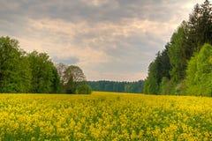Koloru żółtego pole między drzewami Obrazy Stock