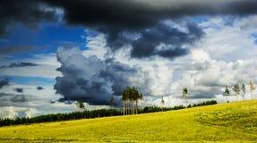 Koloru żółtego pole pod pięknym niebem Fotografia Stock