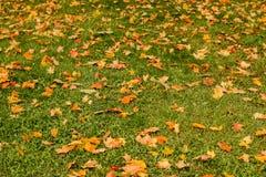 Koloru żółtego, pomarańcze i czerwieni jesieni liście w pięknym spadku parku, Cześć jesieni pojęcie Jesień kolory w naturze Jesie Zdjęcia Royalty Free