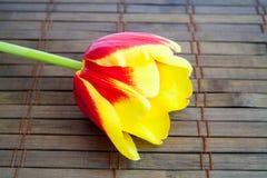 Koloru żółtego tulipan na drewnianym tle obraz royalty free