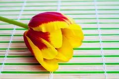 Koloru żółtego tulipan na drewnianym tle zdjęcie royalty free