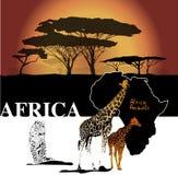 Koloru Africa tło Zdjęcia Royalty Free