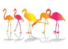 koloru flaminga set Zdjęcie Royalty Free