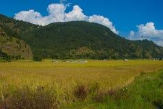 Koloru krajobraz zdjęcia stock