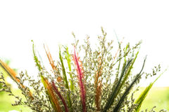 Koloru kwiat w dzbanku Zdjęcie Stock