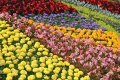 Koloru kwiatu łóżko Lato paleta Obrazy Stock