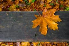 Koloru liść Obraz Stock