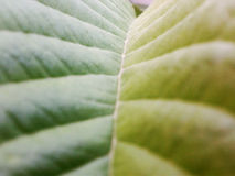 Koloru liść Zdjęcie Stock