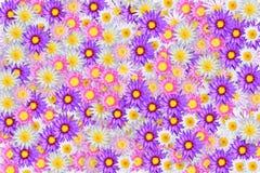 koloru lotos Fotografia Royalty Free