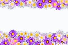 koloru lotos Obrazy Stock