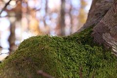 koloru mech drzewa kolor żółty Zdjęcia Stock