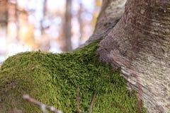 koloru mech drzewa kolor żółty Zdjęcie Royalty Free