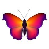 Koloru motyl, odizolowywający na białym tle również zwrócić corel ilustracji wektora Fotografia Royalty Free