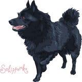 Koloru nakreślenia czarnego psa Schipperke traken ilustracji