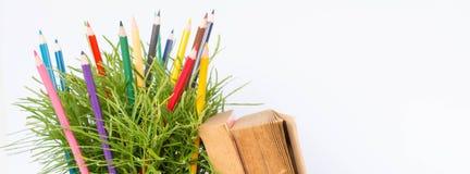koloru ołówek i zieleń krzak Fotografia Stock