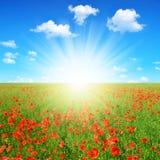 koloru pola indyjski makowy czerwony lato Fotografia Royalty Free
