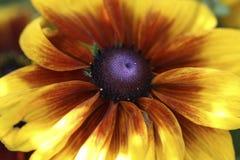 Koloru żółtego rożka kwiat Zdjęcia Royalty Free