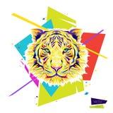 Koloru tygrysa głowa Obraz Royalty Free