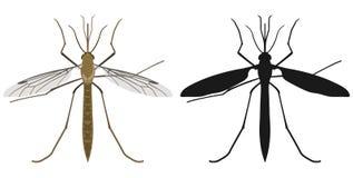 Koloru wizerunek komar i swój sylwetka również zwrócić corel ilustracji wektora ilustracji