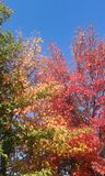 kolory zdjęcie stock