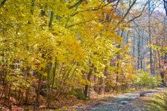 Kolory jesień zdjęcie stock