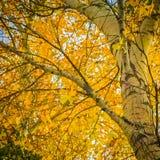 Kolory jesień obraz royalty free